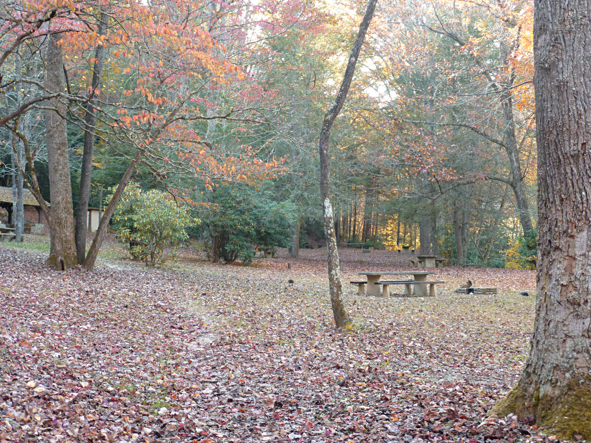 Vast picnic area with tables in a beautiful wooded setting in the fall