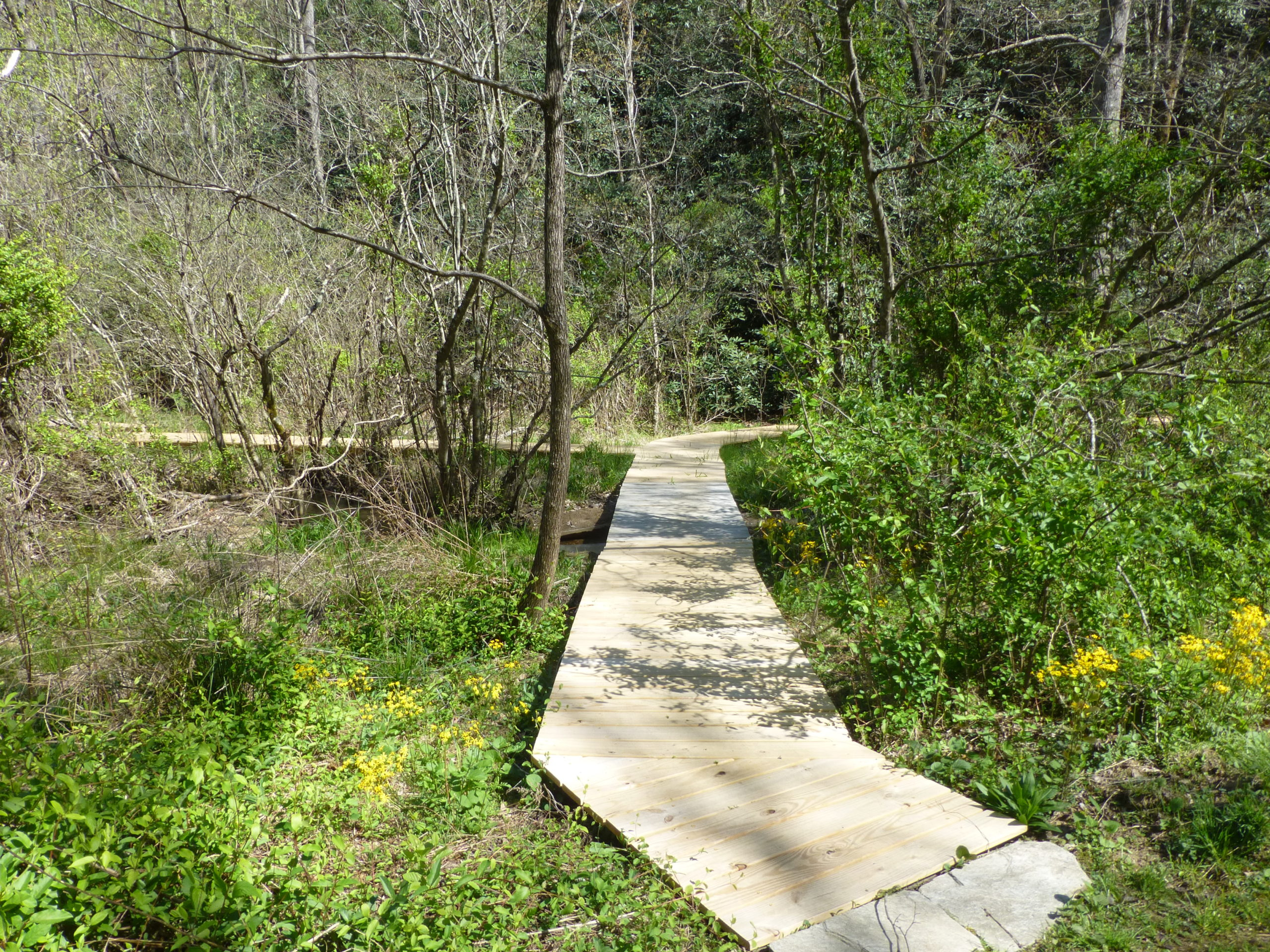 Boardwalk leading into an area with trees and shrubs