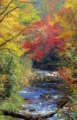 Large stream surrounded by trees with red, yellow and orange leaves