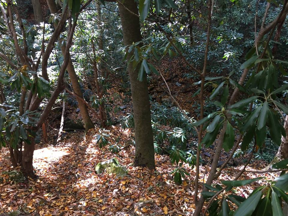Hiking trail covered in leaves leading through large bushy shrubs and trees