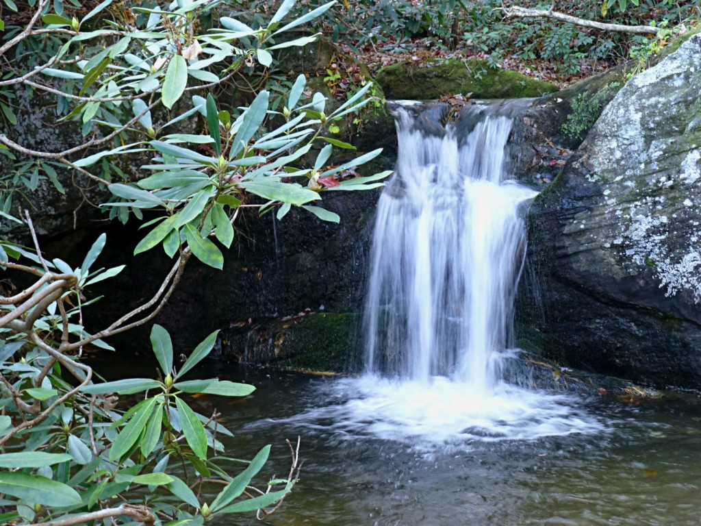 Water tumbling down short boulders into a larger pool of water with evergreen shrub in the foreground