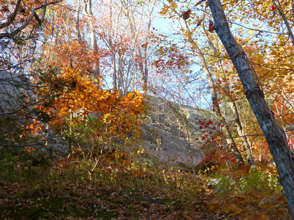 View up a large boulder with trees in fall color in the foreground