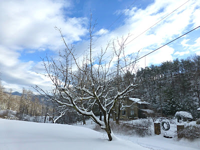 Snow covered tree with forest and mountain landscape behind it