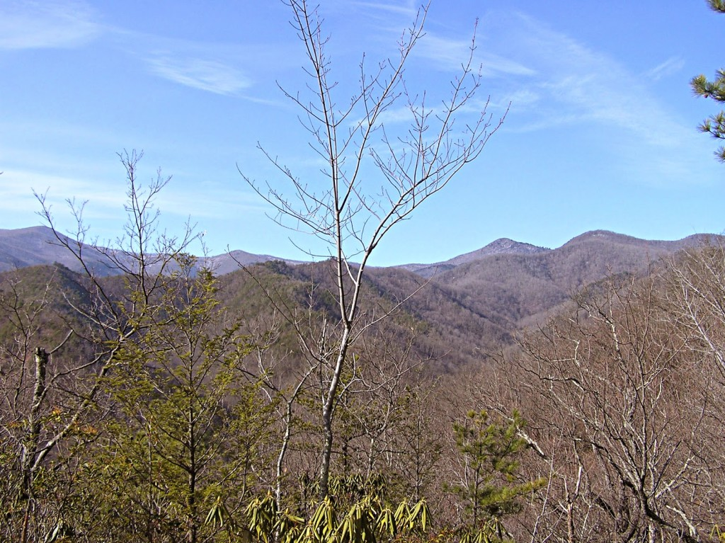 Bare branch trees with mountain vistas in the background and blue sky with wispy white clouds