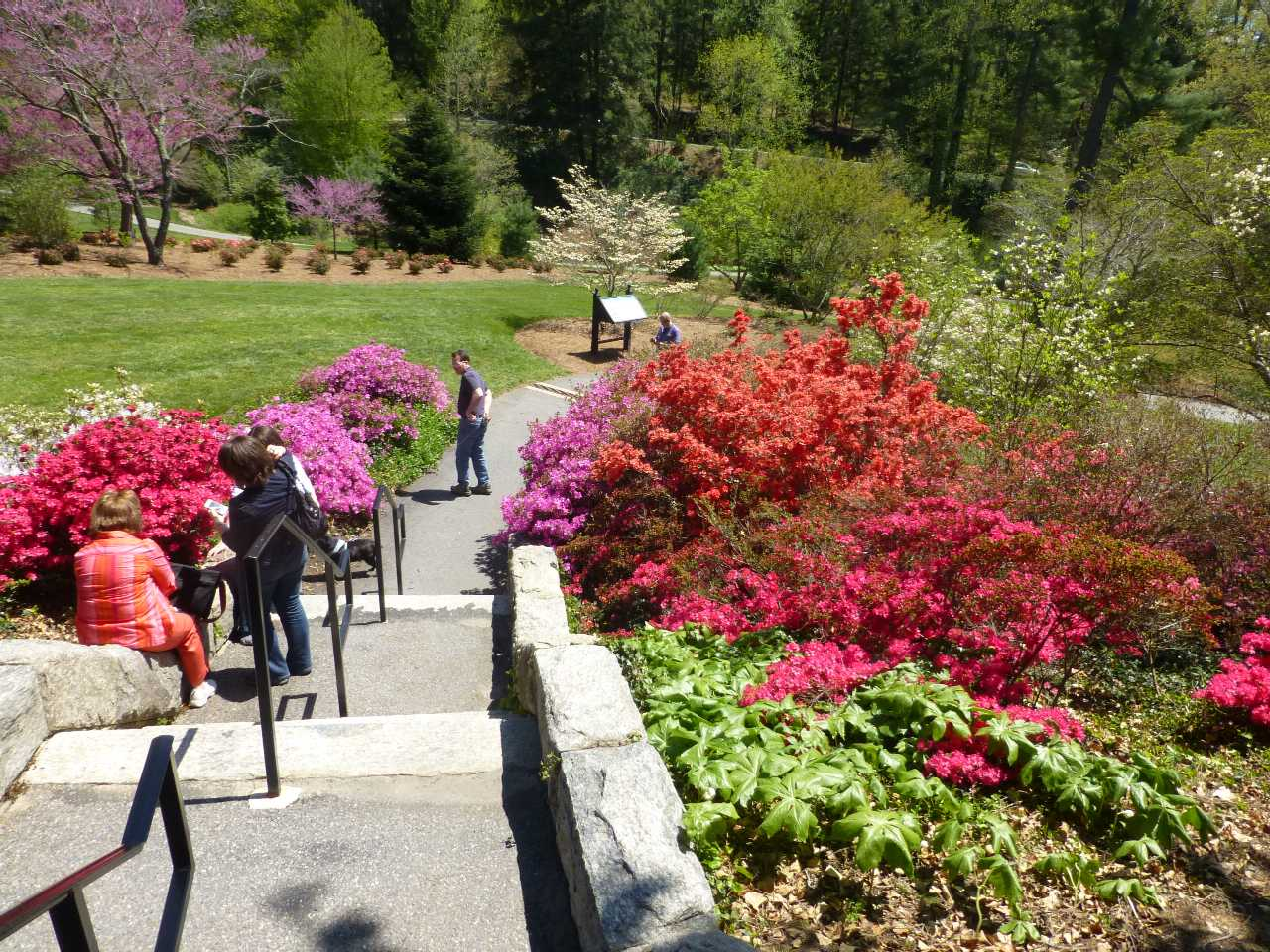 Several sets of stairs leading into a large garden with flowering shrubs