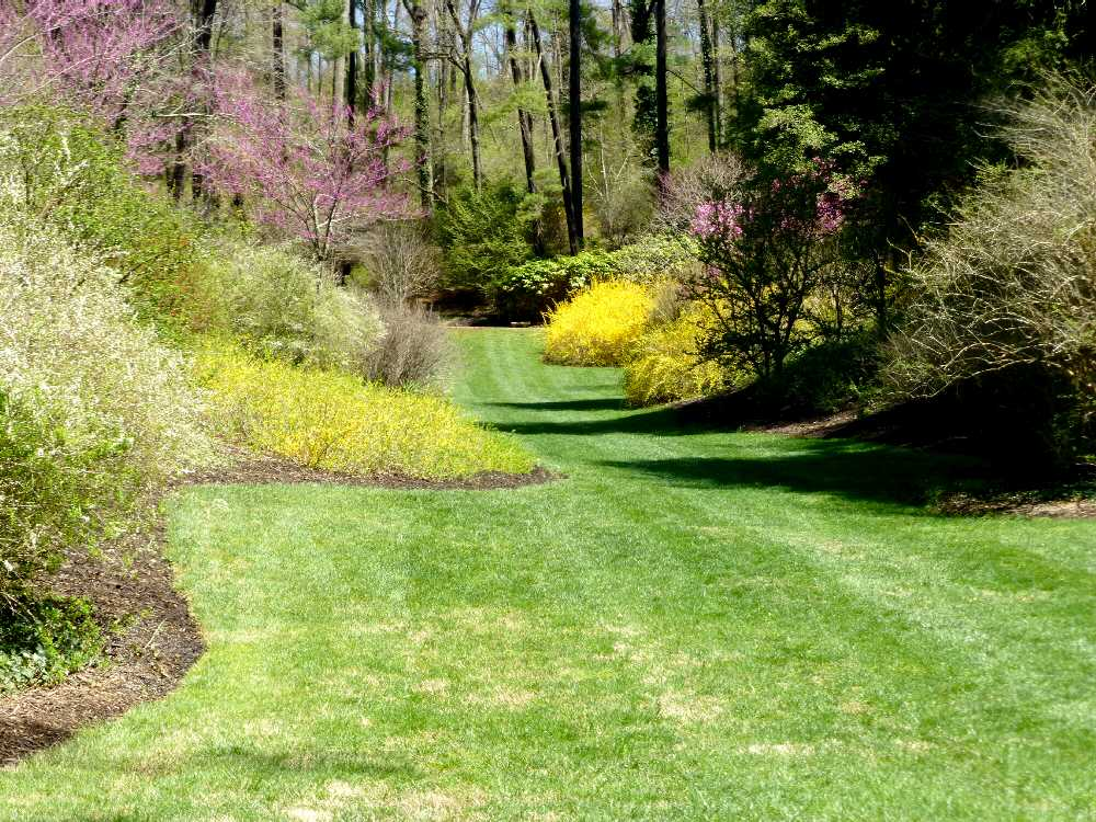 Expansive grassy lawn with spring flowering shrubs on either side