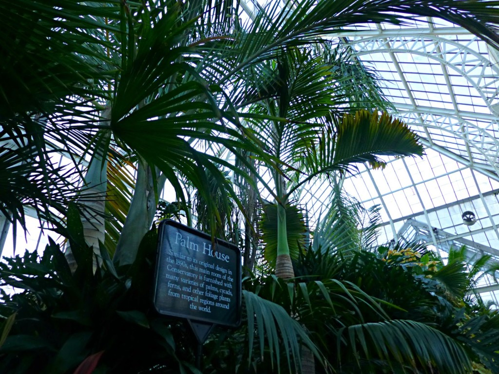 Sign that says Palm House in front of tall palm trees inside a glass building