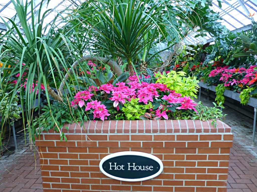 Sign on a brick planter that says Hot House in a room filled with palms and different colored plants and flowers