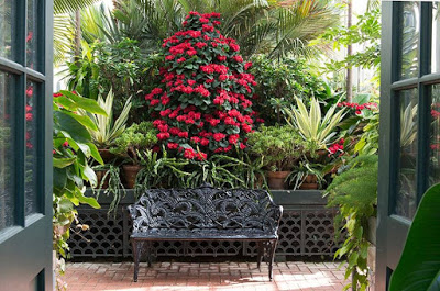 Wrought iron bench in front of huge display of tropical plants and flowers