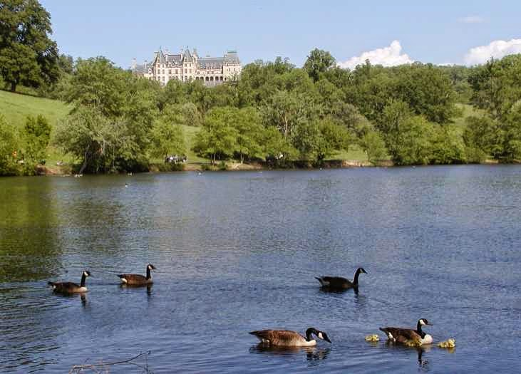Five geese, one with babies, swimming in a large pond with a mansion on a hill in the background