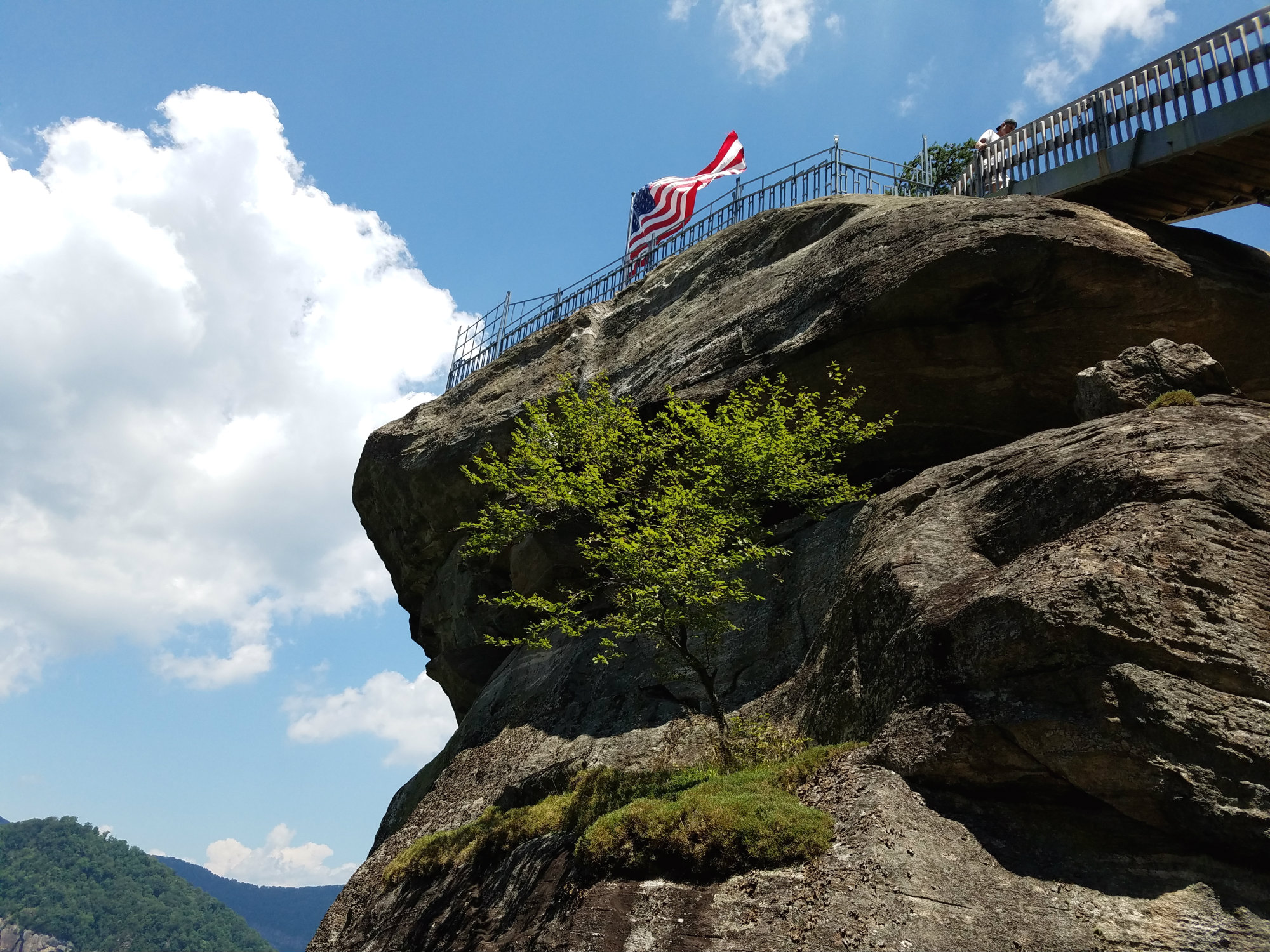 Small tree growing on the side of a large boulder, where a flag flies on top