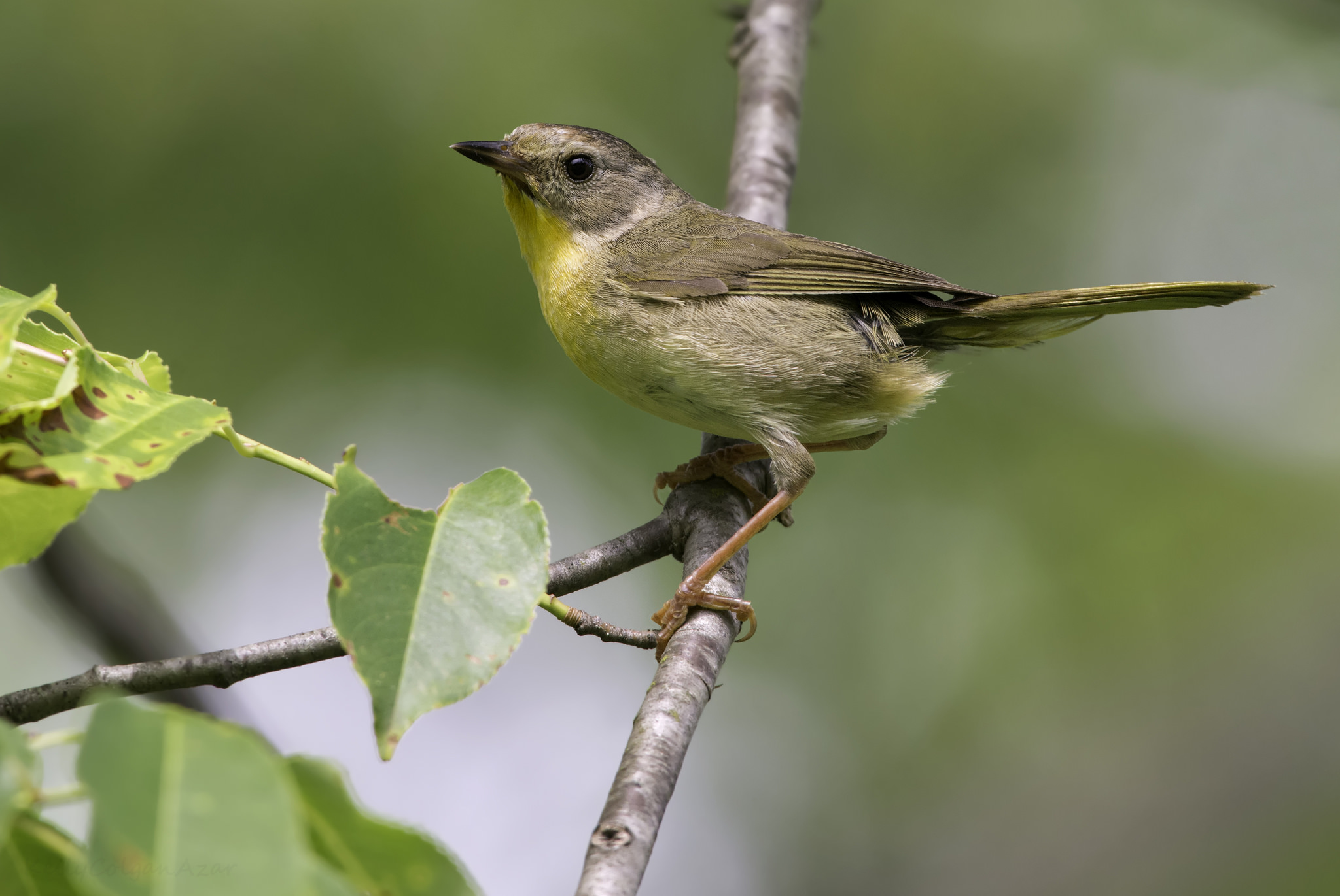 Small bird perched on a leafy branch