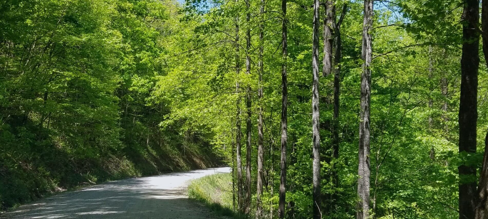 Springtime tree-lined rural road taking a curve
