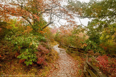 Wooden fence along a winding trail through fall color