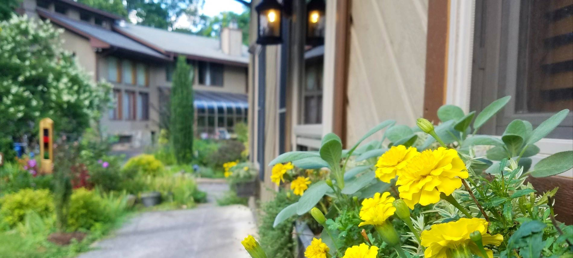 Close view of a windowbox with bright yellow flowers in focus with main inn building in background with landscaping slightly off focus in favor of the flowers.