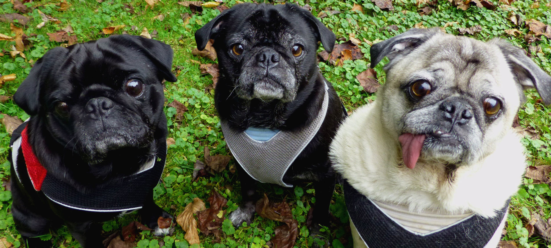 Dog Parks Black Mountain Nc