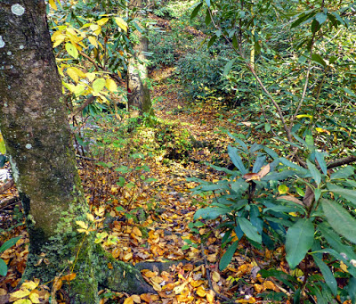 Trail through the woods covered in yellow and orange leaves
