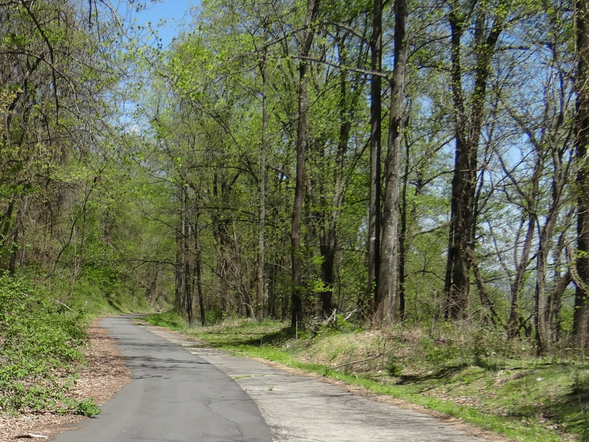 Paved walking trail through forested land in the springtime